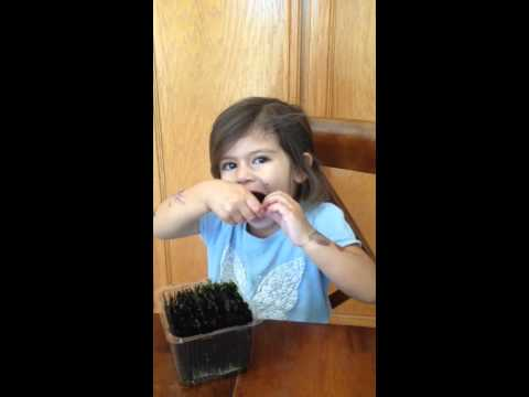 Tkeiaho sera eats seaweed