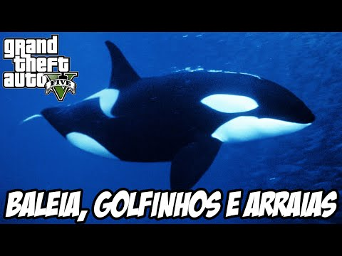 Trailer do filme Mitos e Verdades Sobre as Orcas: Baleias Assassinas