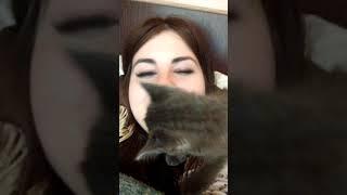 Как котенок выражает свою любовь)