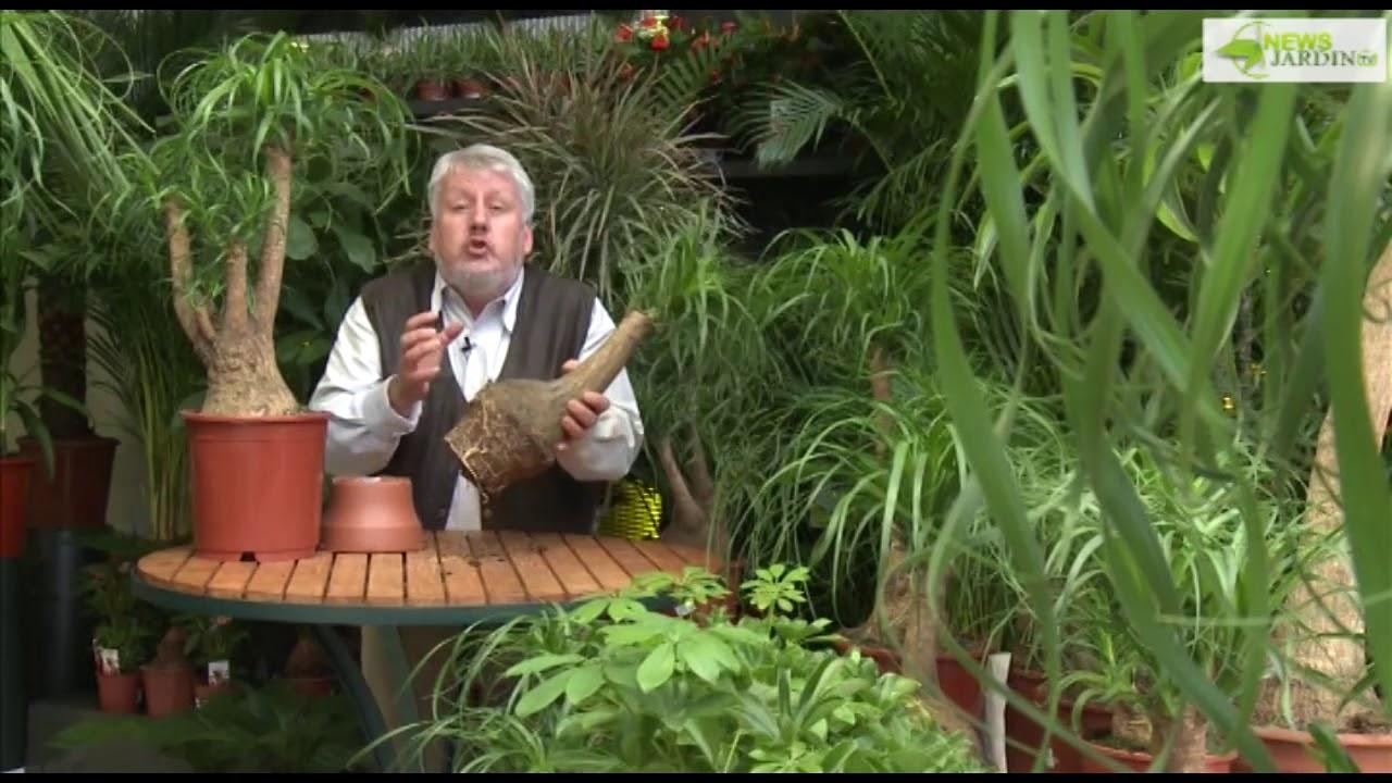 Plantes Exterieur Villaverde | Longeault Pluvault La Jardinerie ...