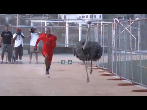 Athlete vs Ostrich