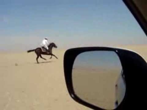Badulla Horse riding in Qatar