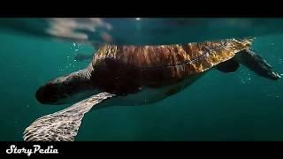 दुनिया की सबसे बड़ी शार्क MEGALODON आज भी जिंदा है ?    LARGEST Shark Megalodon Still Alive ?