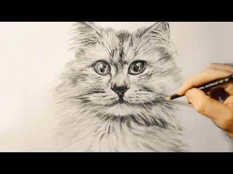 Как рисовать поэтапно Рисунки карандашом для начинающих