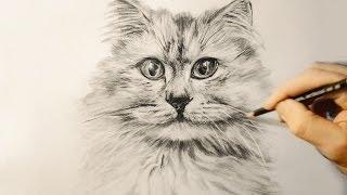 Как нарисовать  кошку   Рисуем КОТА простым карандашом. / Cat drawing