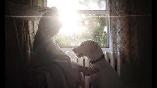 虐待を受け人間をひどく怖がりトラウマを持った犬。 しかし、ある家族を...