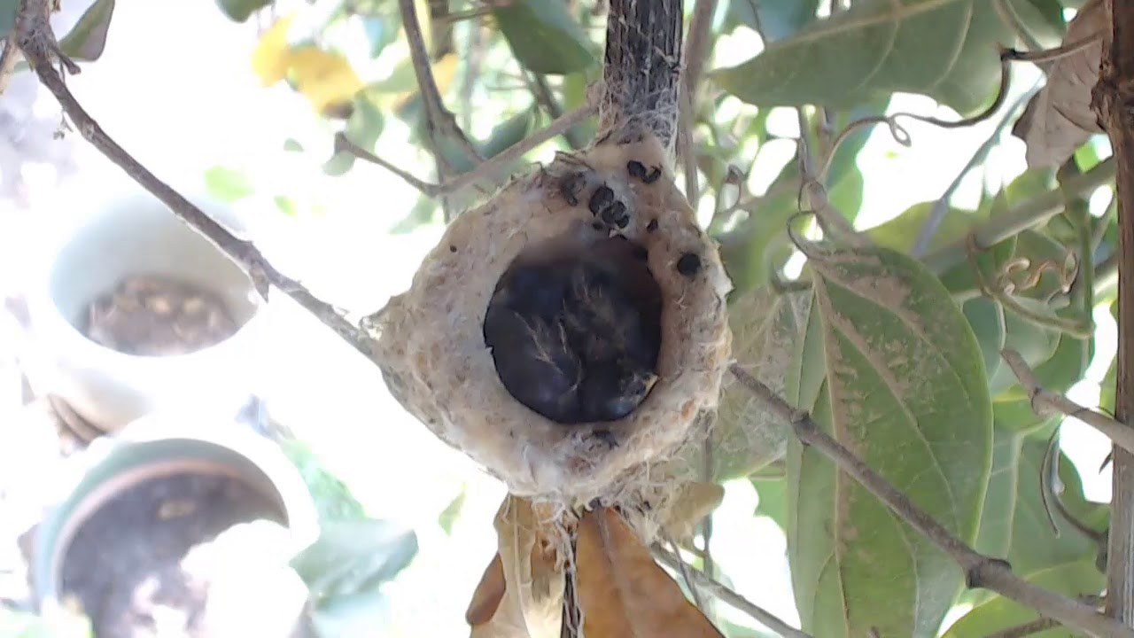 bella hummingbird nest cam 04 23 2018 16 07 21 17 07 21 youtube