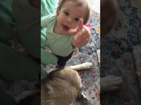 Cute Baby with Patient Anatolian Shepherd (wait for it)