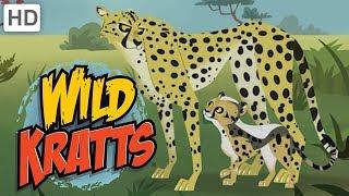 "🐆 Wild Kratts - Meet ""Blur"" the Cheetah!"