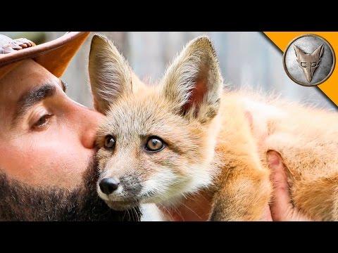 Friendly Baby Fox!