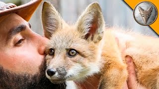 Friendly Baby Fox! thumbnail