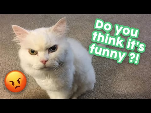 Funny Cat Videos That Will Make You Laugh so Hard 🤣😂