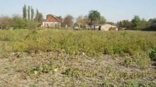 Как строилась САВАННА. Страусиная ферма 2004-2010гг