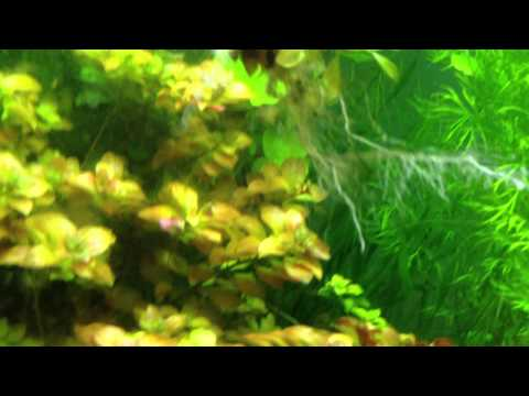 Planted Tank Substrate Flourite By Seachem  Review