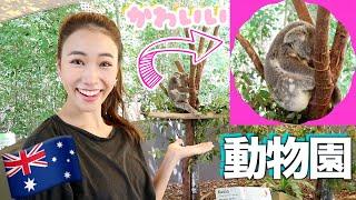 【海外旅行Vlog】オーストラリアのケアンズでおすすめの動物園テーマパーク!🐨🐊