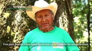 Reforestación en Loma de Enmedio - PPD GUATEMALA