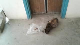Оголодавший кот не давал мне идти...