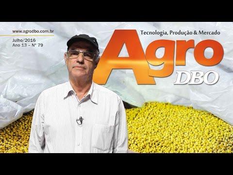 Agro DBO de julho: como escolher a melhor semente para a nova safra