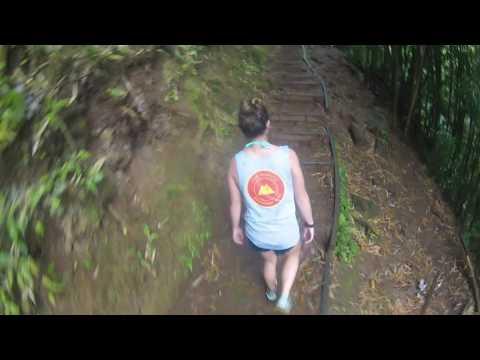 Manoa Falls Hike 2016