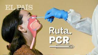 COVID | La RUTA de la PCR: todo lo que necesitas saber de los test de CORONAVIRUS