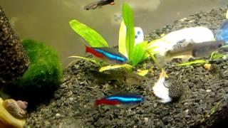 Куда деваются рыбки с аквариума(, 2016-03-21T20:04:05.000Z)