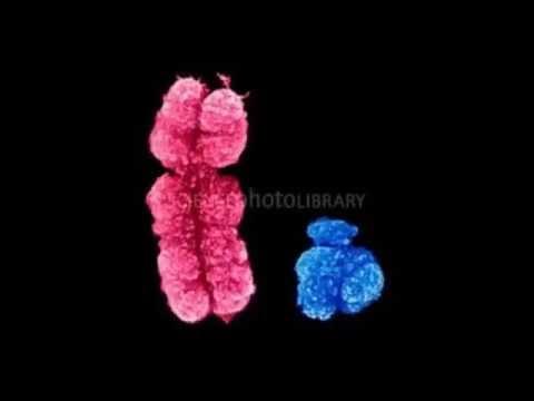 Proven!  Y Chromosome Evolutionary Marvel!