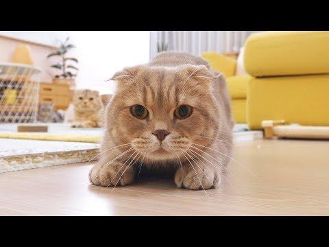 똑똑한 고양이 vs 집사 - 눈치 싸움의 승자는?!
