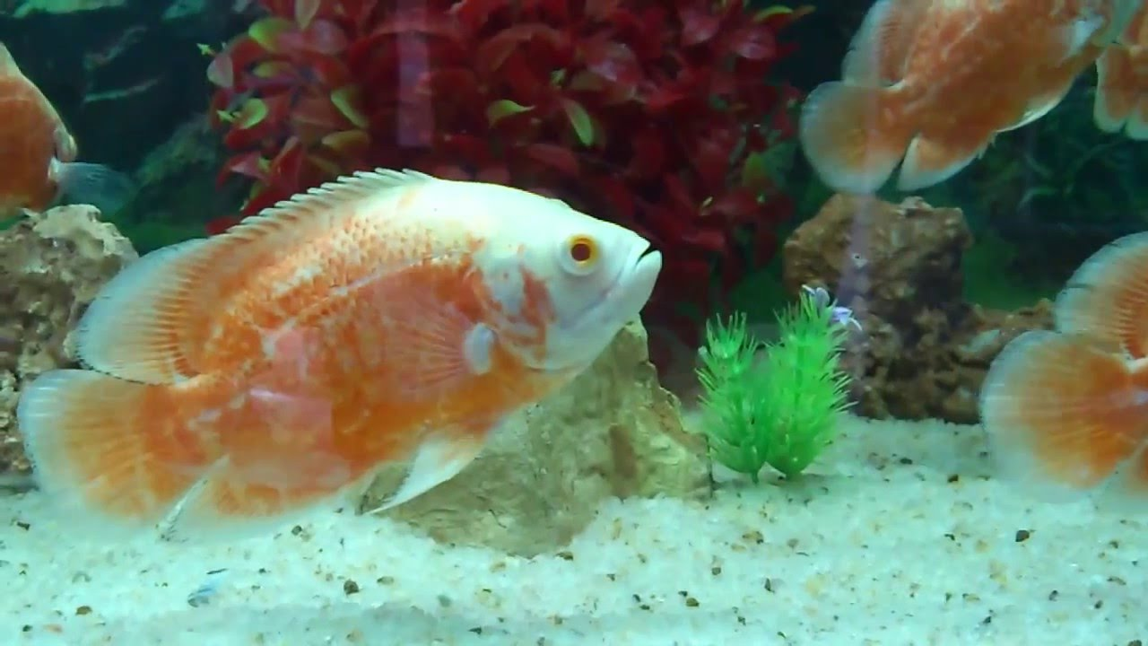 Aquarium Fish Neyyar Dam Kerala Youtube