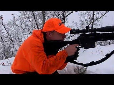 .338 Lapua Mag. VS Elk at 600 yards. Shooting Elk. Hunting Utah