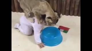 Attacked BY A LION IN Dubai funny videos