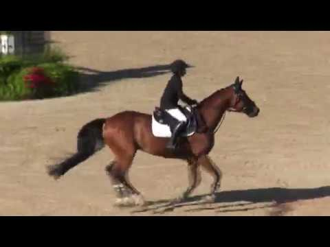 Video of DROMMELS ridden by TAJE WARRICK from ShowNet!