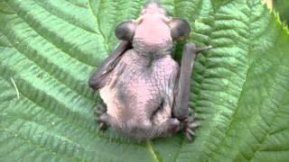 Детёныш летучей мыши - Bat child