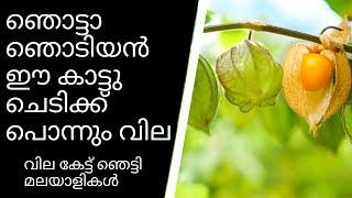 തൊടിയില് ഈ ചെടിയുണ്ടോ||Health Tips Malayalam