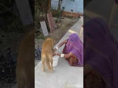Desi bhabhi and desi milk thumbnail