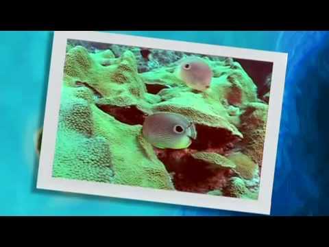 Turks & Caicos Travel Film