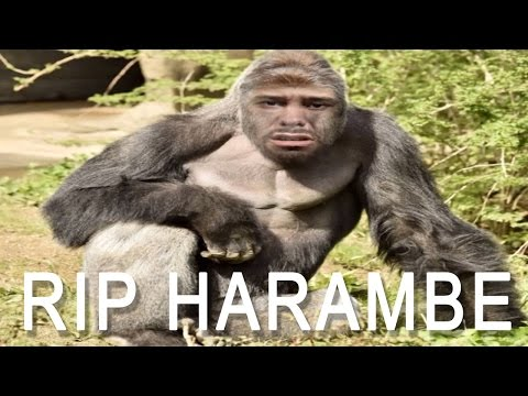 D*CKS OUT FOR HARAMBE