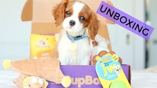 Unboxing Pupbox with Milton | Puppy Subscription Box | Cavalier King Charles Spaniel