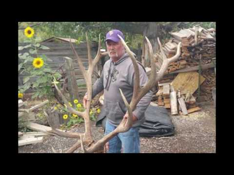 World Record Elk Now on Display