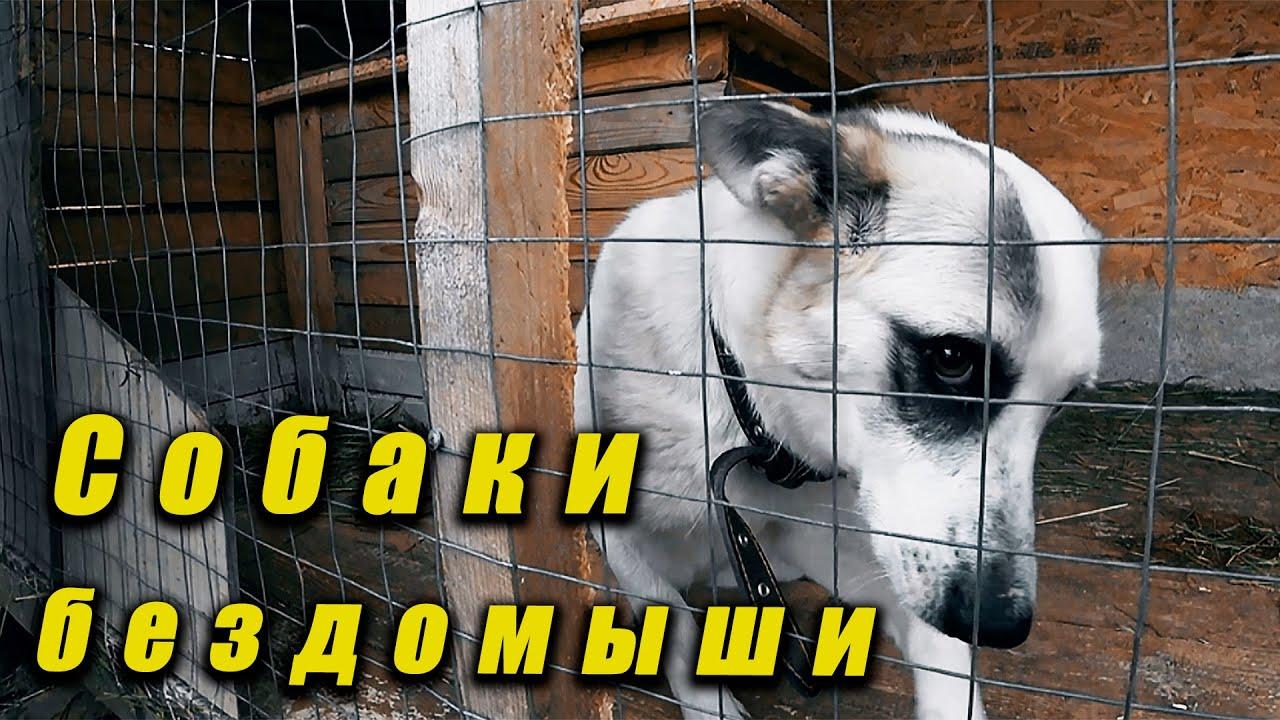 Приют для бездомных собак и кошек.Помощь. - YouTube