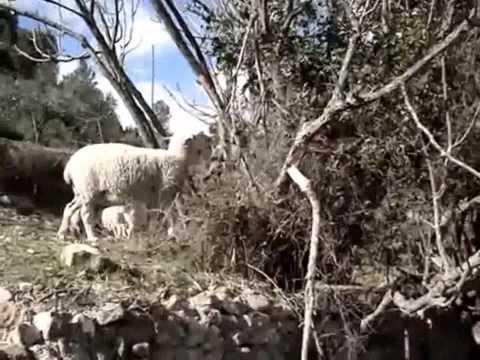 La Generalitat regula la ganadería extensiva tradicional en los parques naturales de la Comunitat