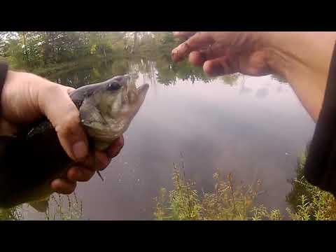 BURLINGTON ONTARIO BASS FISHING BASS-O-RAMA : Axe Man and Old Guy Fishin