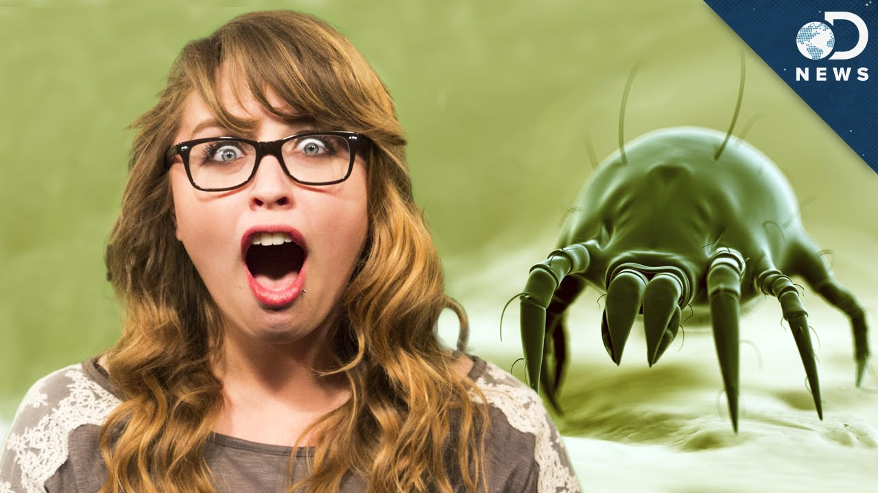 There Are Tiny Mites Living On Your Face!