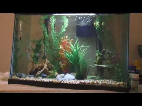 My marineland 20 gallon led aquarium youtube for Freshwater fish for 20 gallon tank