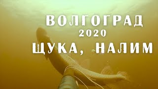 Подводная охота в Волгограде 20 02 20 Щука налим