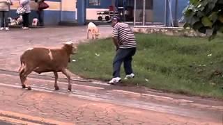 Cabra ataca moradores de um bairro no Brasil