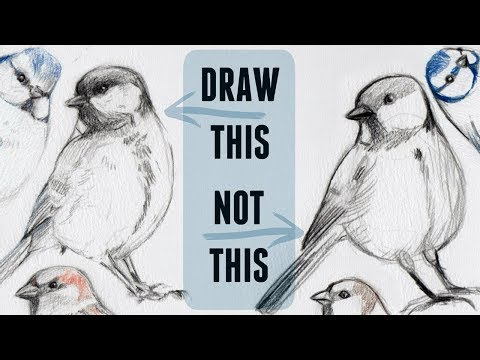 Sketching Animals: How to Draw a Realistic Bird