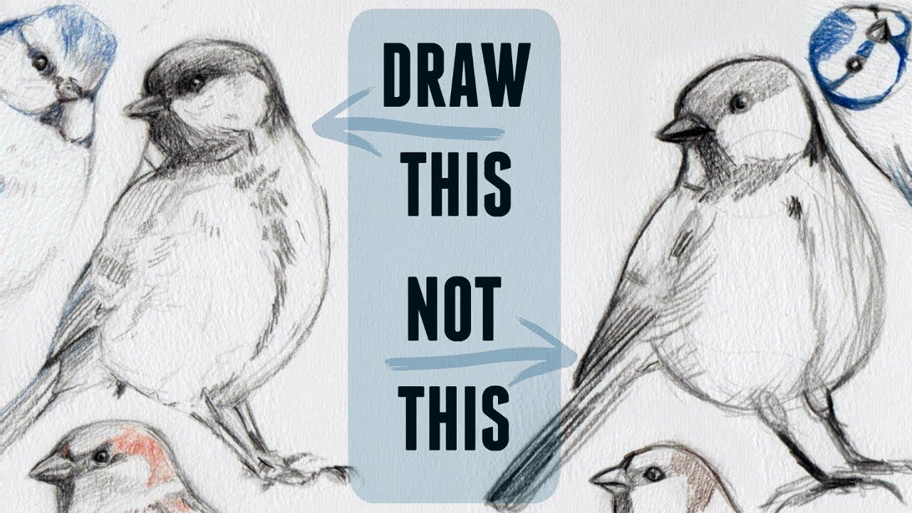 Sketching animals how to draw a realistic bird