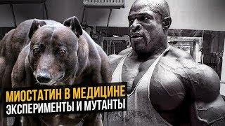 Миостатин - фактор сдерживающий рост мышц (Мутация гена у животных)