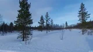 Красота Божьего мира.  Сова, снегири, синицы. Природа, Мурманск, солнце, зима, сопки. 18.02.2020