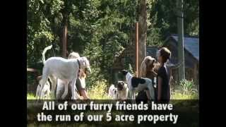 Victoria Bc Doggy Daycare | Ben Kersen & The Wonderdogs